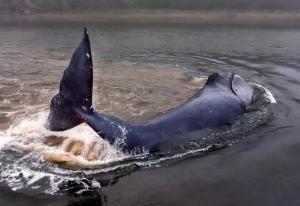 россия хабаровск, кит, мель, трагедия, спасение, волонтер