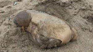 сша, пляж, море, побережье, чудище, морское чудовище, фото, мир животных, морские обитатели