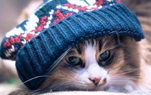похолодание, погода, прогноз погоды, новости украины, общество