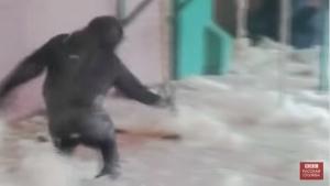 Горилла, видео, общество, мир, мир животных