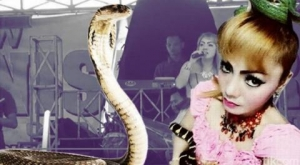 кобра, индонезия. ирма бьюл, укус