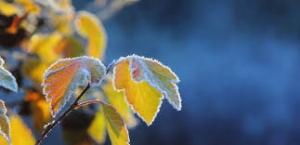погода, украина, зима, 2019, морозы, холода, снегопады, лето, весна, осень