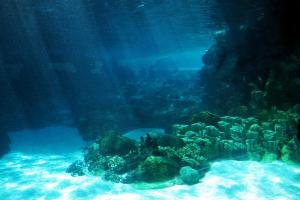 Планктон, дорога, черви, динозавры, ученые, исследователи, древняя дорога, фото, сенсация, подробности, вся правда, океан, общество