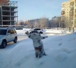 россия, омск, происшествия, общество, виде, мир животных