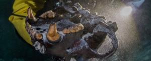 короткомордый медведь, новости, наука, археология, ледниковый период, Юкатан, Мексика