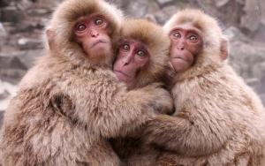 крымский зоопарк, взорвался генератор, мерзнут животные, энергоблокада