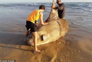 австралия, рыба, чудовище, солнечная рыба, фото
