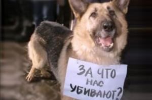 Одесса, живодерня по ул. Троицкая, шизофреничка мучает собак