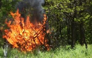 пожар, лесной пожар, Одесса