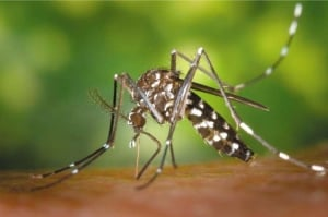 лихорадка денге, малайзия, минздрав малайзии