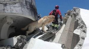 землетрясение, эквадор, лабрадор дайко, происшествия, общество