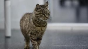кошка матроска, общество, происшествия, россия