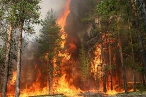 новости России, МВД, общество, пожар
