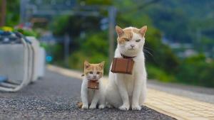 кот, путешественник, австралия, великобритания, обещство, мир животных, новости