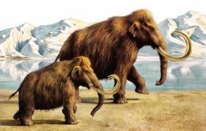 сша, мамонты, гарвард, ученые, наука, гибрид, мир животных, эксперимент
