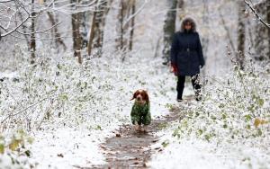 укргидрометцентр, погода в украине, погода в декабре, прогноз погоды, новости украины