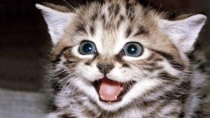 Луцк, криминал, жестокое обращение с животными, котенок, суд