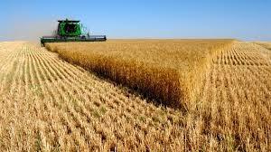 украина, иран, экспорт,  пшеница, бизнес