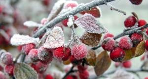 погода, гидрометцентр, заморозки, иней, прогноз, осадки