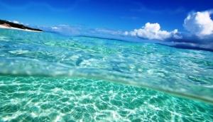 океан, подводный мир, ученые, рыба, марианская впадина