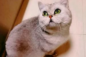 кошка, ухань, коронавирус, смотреть видео, животные