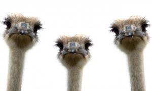 ГФС, Луганская область, ЛНР, страусы