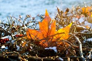 холода, похолодание, погода, прогноз, ноябрь, осень, прогноз погоды