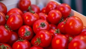 россия, белоруссия, томаты, санкционные продукты