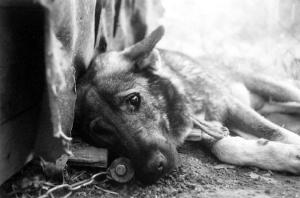 киев, бездомные собаки, отравление