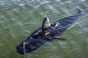 робот-акула, сша, испытания