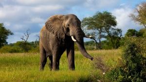 мир животных, вымирание животных, глобальная катастрофа, глобальное вымирание животных, разрушение планеты, угроза вымирания животных