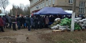 выборы, донбасс, лнр, днр, донецк, луганск, картошка, фото, капуста, казанский, русский мир