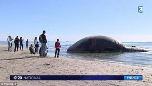кит, франция, взрыв, лазурный берег