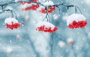 новости, Украина, климат, изменения, глобальное потепление, зима, прогноз погоды, Олешковские пески, пустыня, прогноз, исчезновение зимы