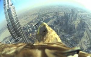 ОАЭ, орел-могильник, мировой рекорд, небоскреб