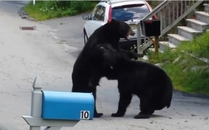 драка, медведи, квартал