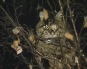 кот, нижний Новгород, россия, барсик
