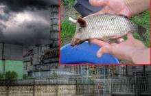В реке Припять туристы выявили полурыбу-полусвинью: мутанты вскоре окажутся в Черном море