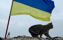 """Любимые """"котобандеровцы"""": видео с четвероногими питомцами, которых приютили на передовой защитники Украины"""