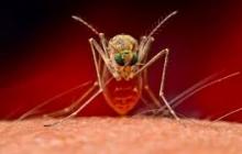 Смертоносный экзотический вирус косит жителей планеты. Первыми жертвами стали Канада и Румыния