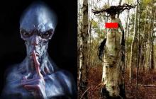 В лесах Карелии нашли Дриаду Нибиру, напоминающую Горгону-мутанта