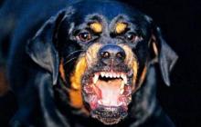 В Одессе ротвейлер завалил хозяйку на землю и начал грызть: пса остановило только оружие