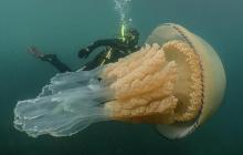Морской монстр размером с человека: пугающую находку дайверов у берегов Британии показали в Сети