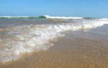 В Австралии туристы на пляже обнаружили неизвестное существо: СМИ показали фото пугающей находки