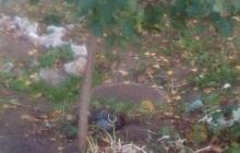 Сбили беспилотник: на территории школы в Лисичанске прогремели взрывы – кадры ЧП