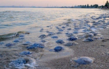 """Кадры """"ада"""" с украинского пляжа вызвали в Сети переполох: столько мертвых существ здесь никогда не видели"""