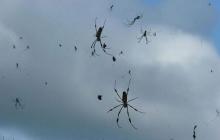 Дождь из тысяч пауков: в Бразилии случилось неожиданное явление, что напугало местных жителей, – кадры