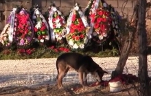 Могилу Януковича охраняет собака. Видео