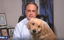 В США голодный пес курьезно сорвал телеведущему FOX 13 News прямой эфир, видео