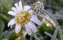 Погода на 23 и 24 мая: в Украине ожидаются ночные заморозки и дожди